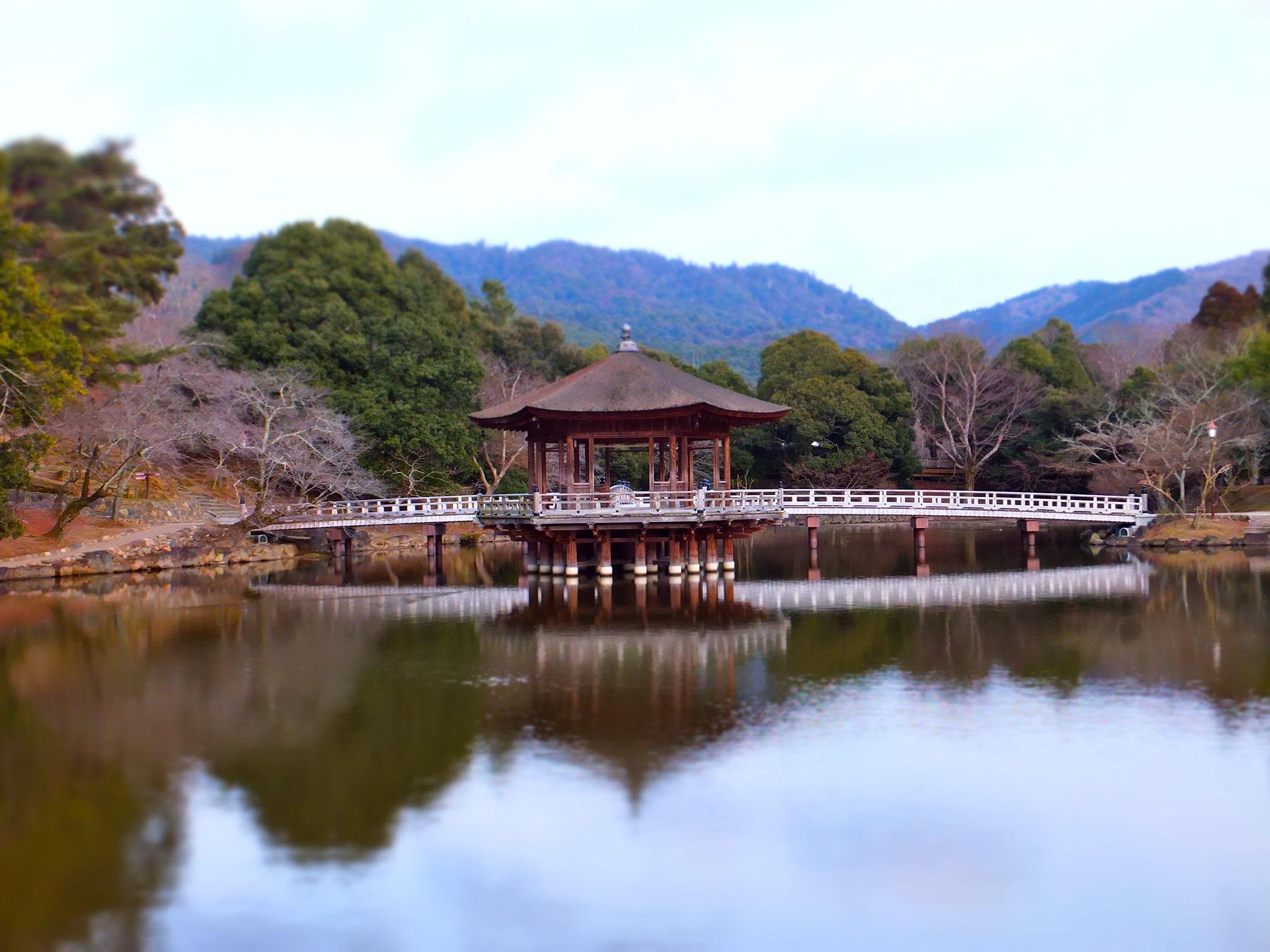 Il Parco di Nara in Giappone